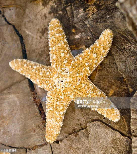 A starfish decorating a seafood taverna on August 24 2010 in Heraklion Greece
