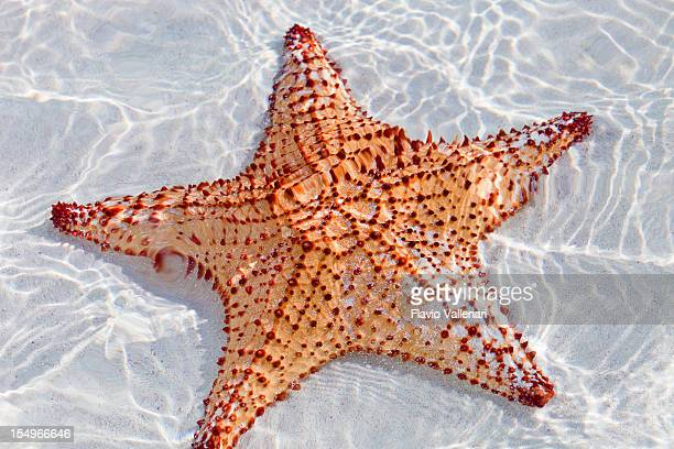 Starfish in clear waters