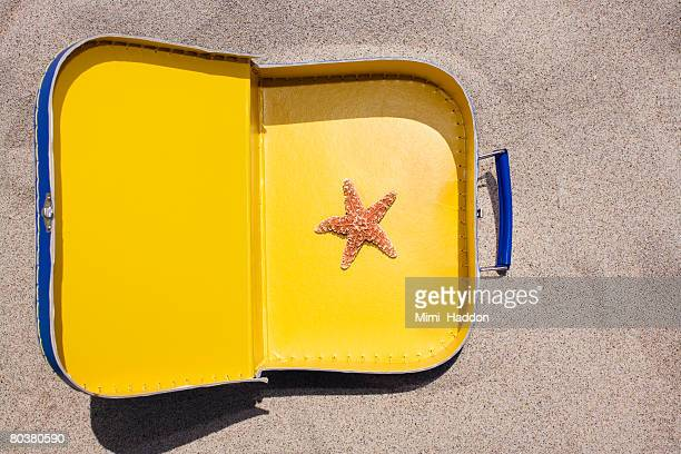 Starfish in suitcase