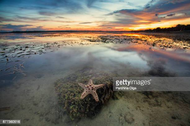 starfish in sunset. bali, indonesia - starfish stock pictures, royalty-free photos & images