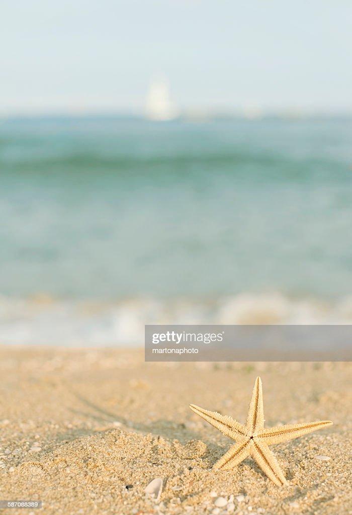 Starfish in the sand : Foto de stock