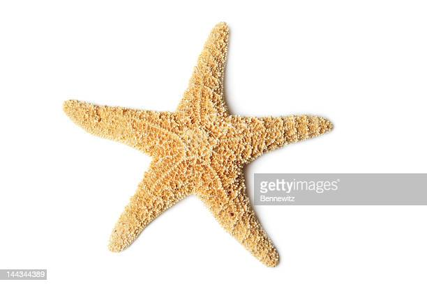starfish, isolated on white - starfish stock pictures, royalty-free photos & images
