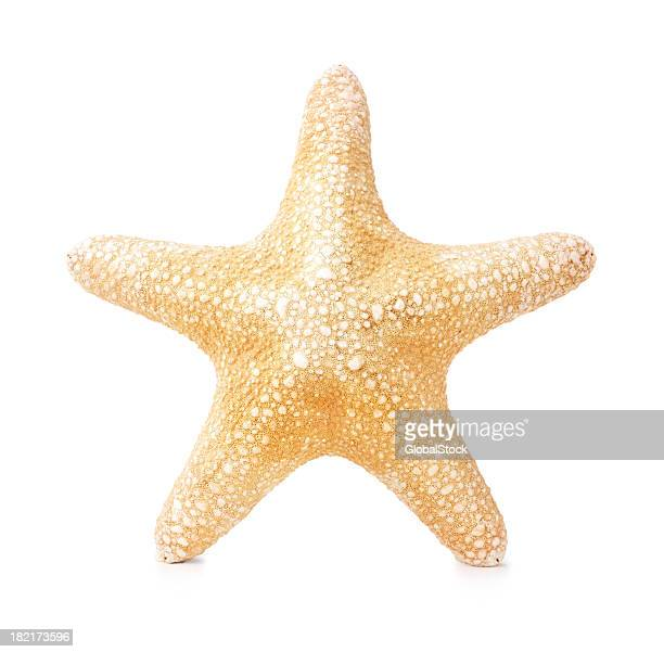 starfish isolated on white - starfish stock pictures, royalty-free photos & images