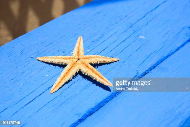 starfish lying on the bench, symi, grecce - symi stock photos and pictures