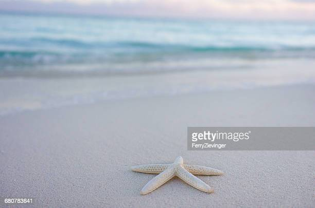 starfish on beach, turks and caicos, caribbean - starfish stock pictures, royalty-free photos & images