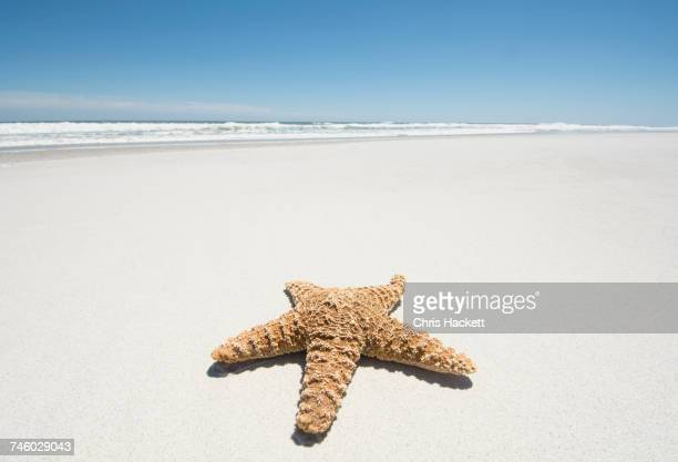 starfish on empty sandy beach - starfish stock pictures, royalty-free photos & images