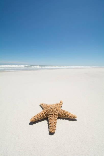 30d72d7dd63c Starfish on empty sandy beach