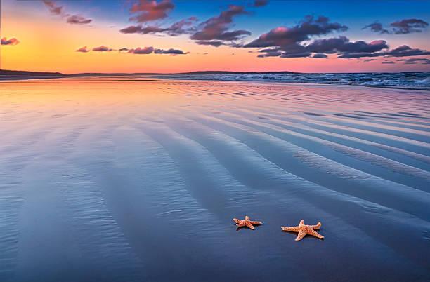Starfish On Sand Wall Art