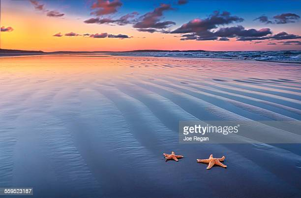 starfish on sand - starfish stock pictures, royalty-free photos & images