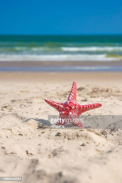 starfish on sandy beach - quintana roo stock pictures, royalty-free photos & images