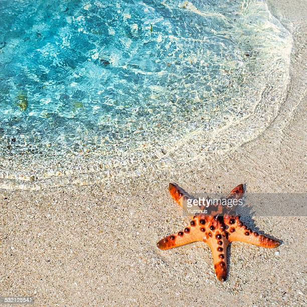 starfish on the beach, beitung island, indonesia - starfish stock pictures, royalty-free photos & images