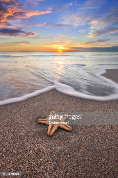 starfish on the beach, fort lauderdale, florida - sunrise fort lauderdale stock pictures, royalty-free photos & images