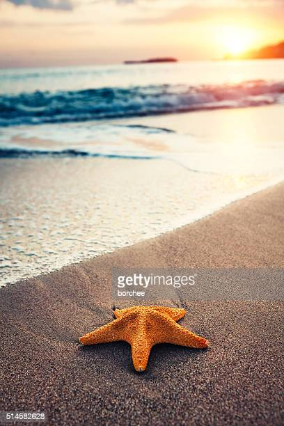 starfish on the beach - starfish stock pictures, royalty-free photos & images