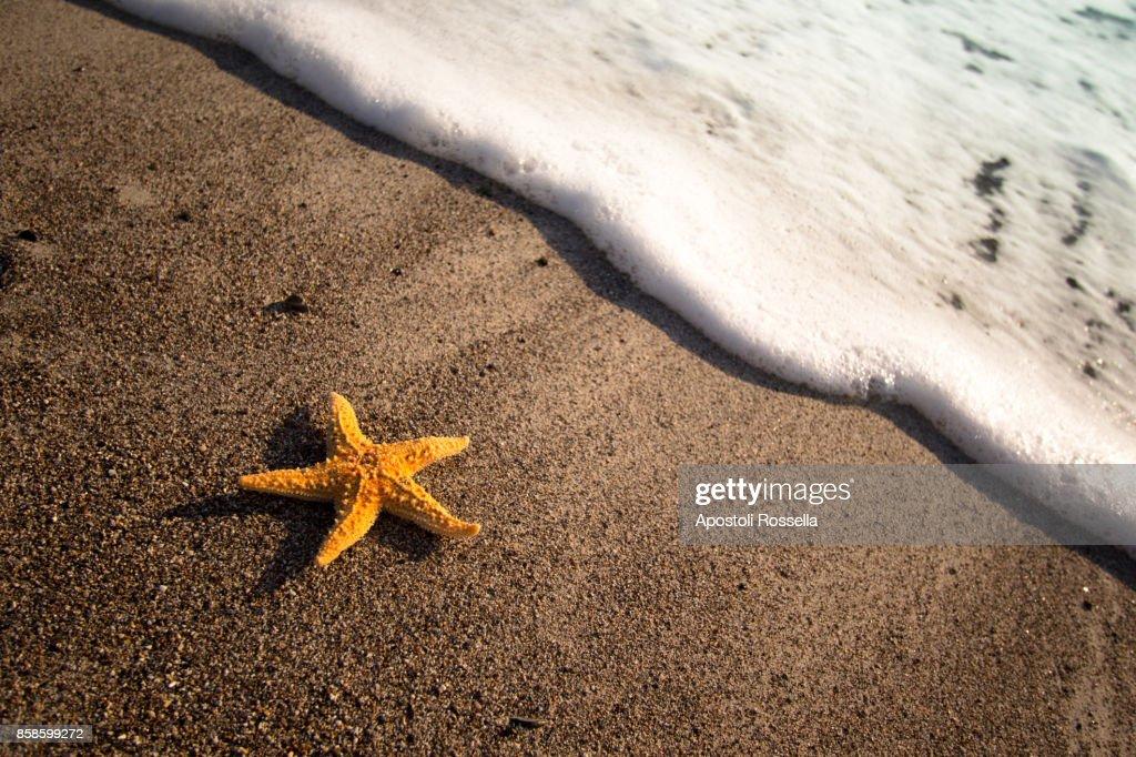 starfish on the beach : Stock-Foto