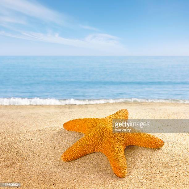 starfish on the beach shore - atlantic islands stock pictures, royalty-free photos & images