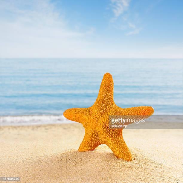 Estrella de mar en la playa de la costa
