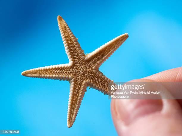 starfish - vanessa van ryzin foto e immagini stock
