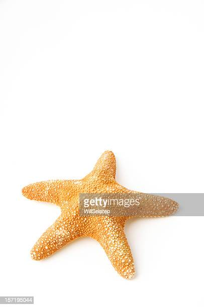 starfish - starfish stock pictures, royalty-free photos & images