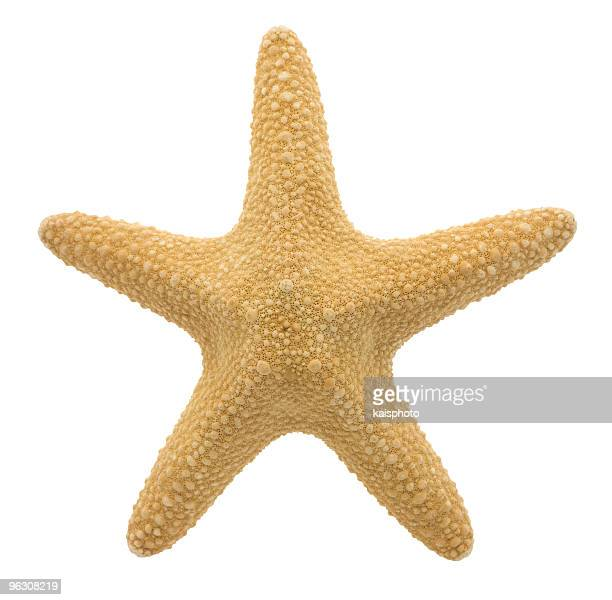 starfish (xl) - starfish stock pictures, royalty-free photos & images