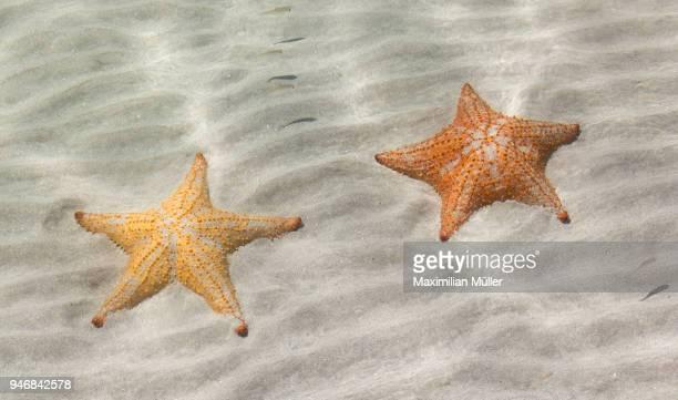 Starfish, Playa Estrella (Starfish Beach), Bocas del Toro, Panama