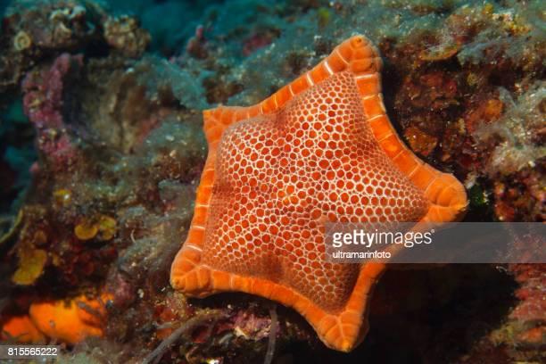 Oogpunt van Starfish zee leven Underwater sea star duiker