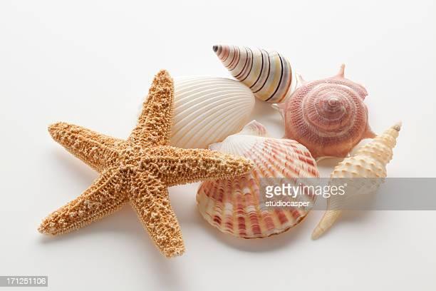 Étoile de mer coquillages &