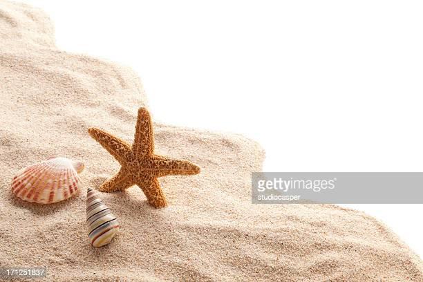 Carcasas & estrella de mar