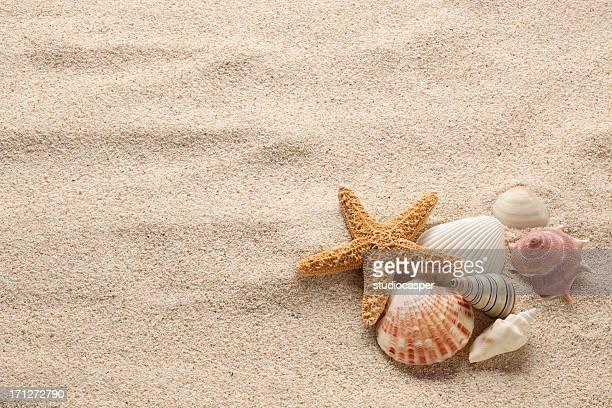 Estrela-do-mar & Shells