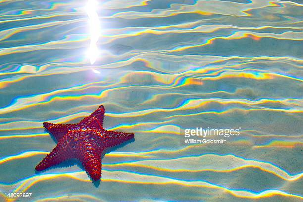 starfish through refracting water - abaco islands stock photos and pictures