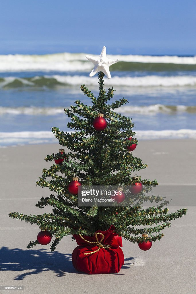 Christmas Ornament Tops.A Starfish Tops A Christmas Tree At The Beach Stock Photo