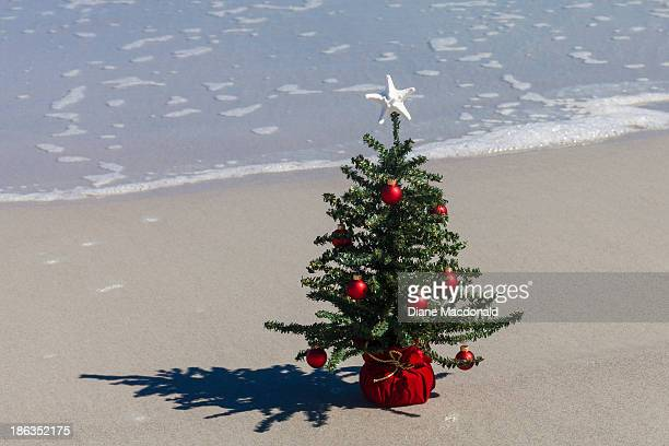 A starfish tops a Christmas Tree at the beach