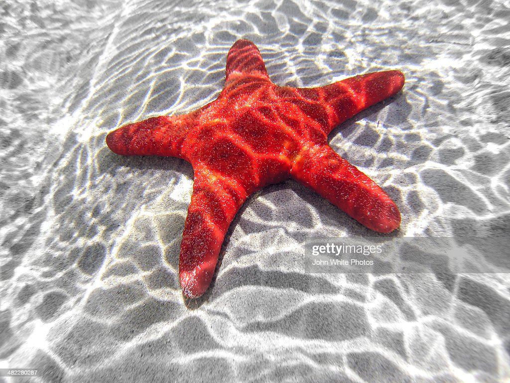 Starfish underwater in shallow water. Australia. : Stock Photo