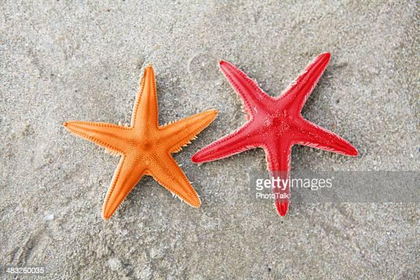 Estrella de mar, XXXL