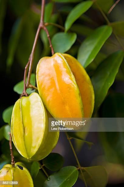 Starfruit ripening