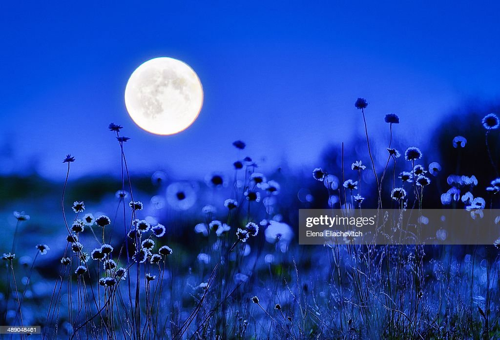 Stargazing : Stock Photo