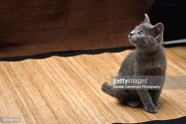 staring at human - daniele carotenuto stock pictures, royalty-free photos & images