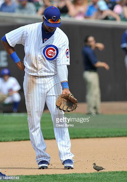 Starlin Castro of the Chicago Cubs finds a bird on the field during the seventh inning of a game against the San Diego Padres on May 28, 2012 at...