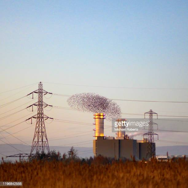 starling murmuration at the newport wetlands nature reserve resembling smoke from the chimneys of the uskmouth gas fired power station - flyby stock pictures, royalty-free photos & images