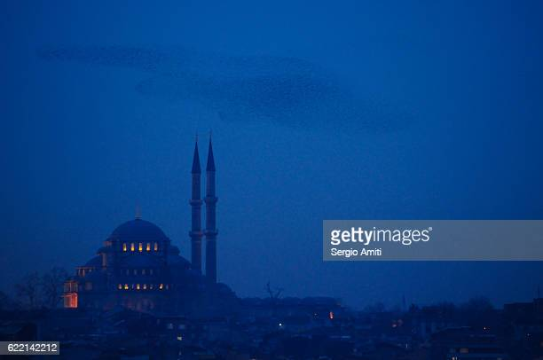 Starlings flocking over Beyazit Mosque, Istanbul