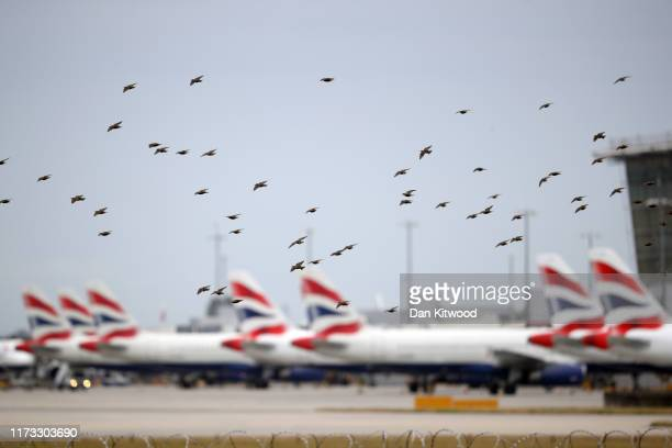 Starlings fly past British Airways planes sat idle at Heathrow's Terminal 5 on September 9 2019 in London England British Airways pilots have begun a...