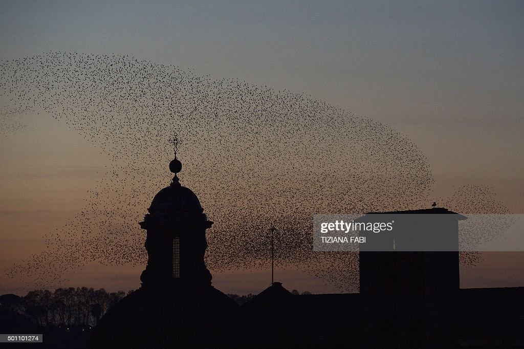 ITALY-BIRDS-MIGRATION-STARLINGS : News Photo