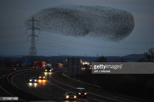 Starlings put on a display near the M6 as they gather in murmurations on November 21 2018 in Gretna Scotland It is thought that starlings flock...
