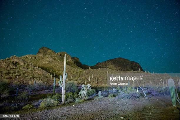 starry night over cactus filled desert in tucson, arizona, usa - tucson stock pictures, royalty-free photos & images