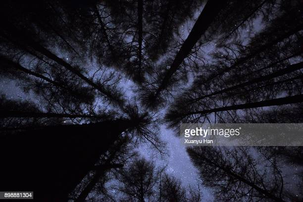 Starry sky above winter forest