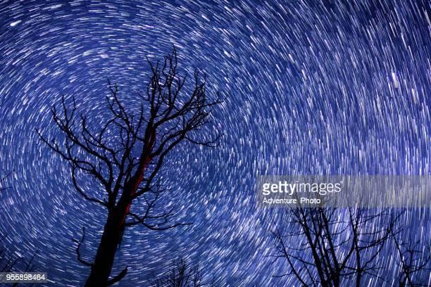 starry sky and tree silhouette - stella cometa foto e immagini stock