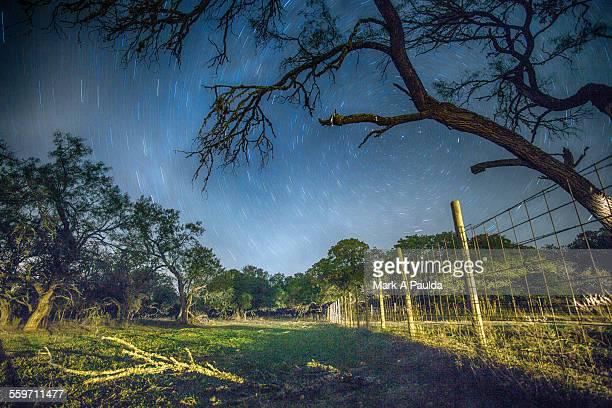Starry Sky behind Claw Like Tree