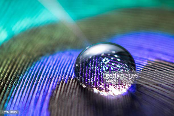 Starry Water Droplet on Peacock Feather