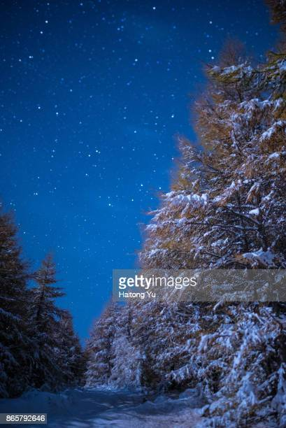 starry winter forest. - winter sports event stock pictures, royalty-free photos & images