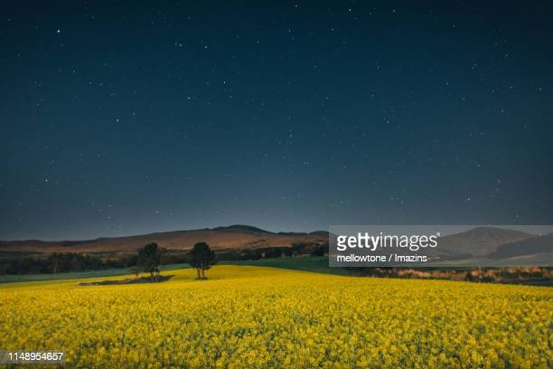 stars on night sky and rape flower, jeju island, south korea - jeju island stock pictures, royalty-free photos & images