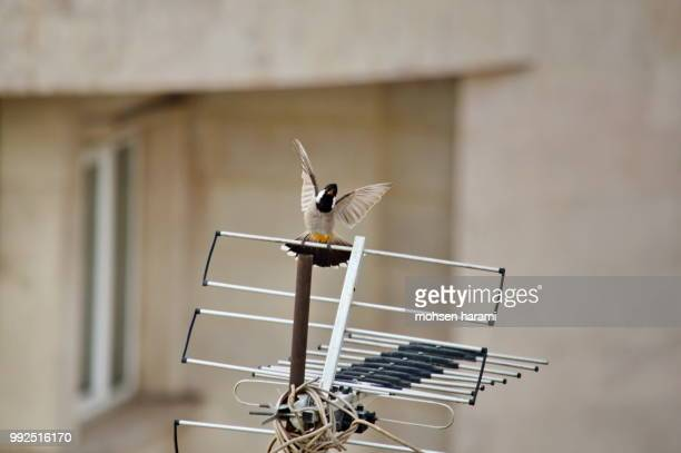 start - nightingale bird stock pictures, royalty-free photos & images